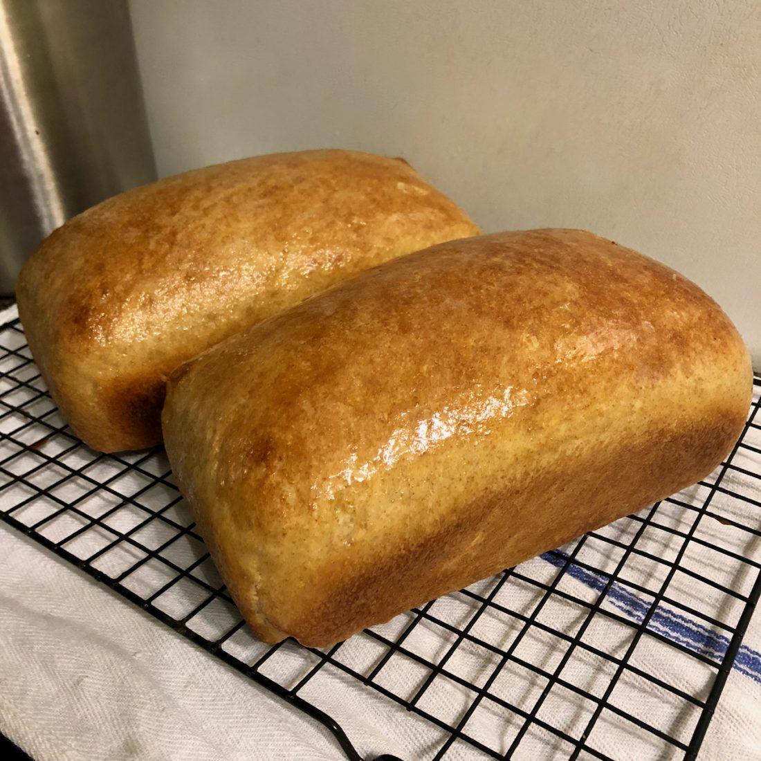 Carolina Rice and Wheat Bread